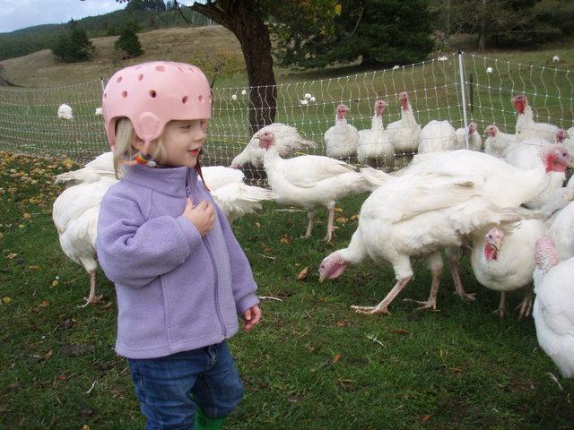 Emi Helping Move the Turkeys