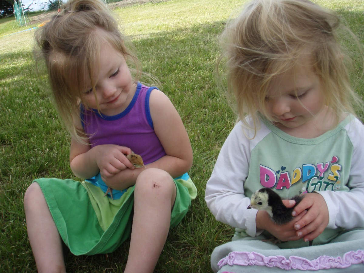 Grandkids With Six Day Old Heritage Poults '10